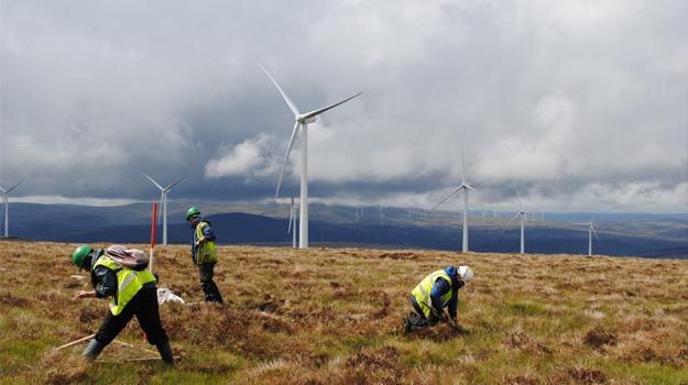 Wind-farm-625